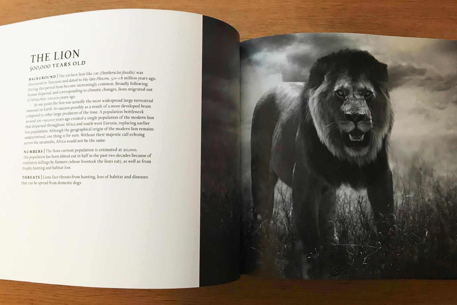 Afrikaboken_PAGE-10